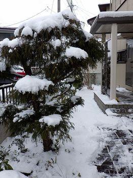 20160124 Snow.JPG