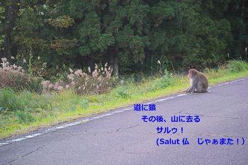 20171031 Akiu Saru.jpg