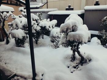 20180123 Niwa Snow.jpg