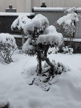 20180212 Niwa snow.jpg