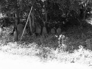 石碑6.jpg