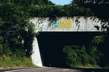 animal road.jpg